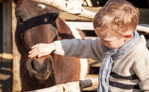Young boy and equine therapy
