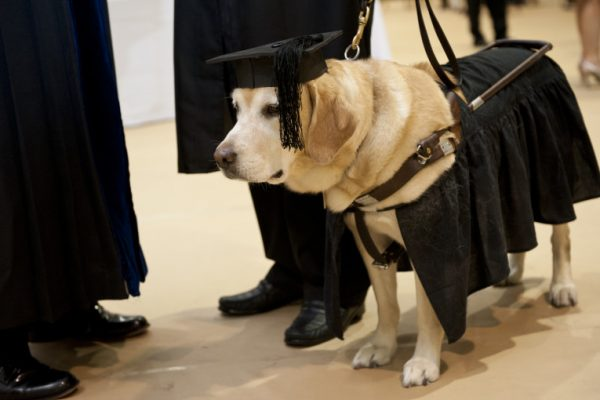 Johns Hopkins Dog Graduation (Image credit: Disabilityand.me), Guide dog gets Masters Degree